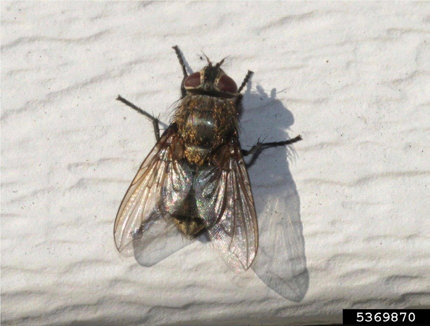 Cluster fly identification