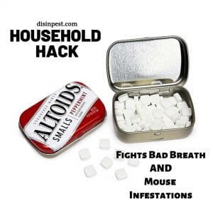 Peppermint Mouse Deterrent Naturally with Altoids