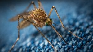 Closeup of mosquito - Photo by Егор Камелев on Unsplash
